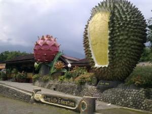 Sewa Mobil Bogor Warso Farm